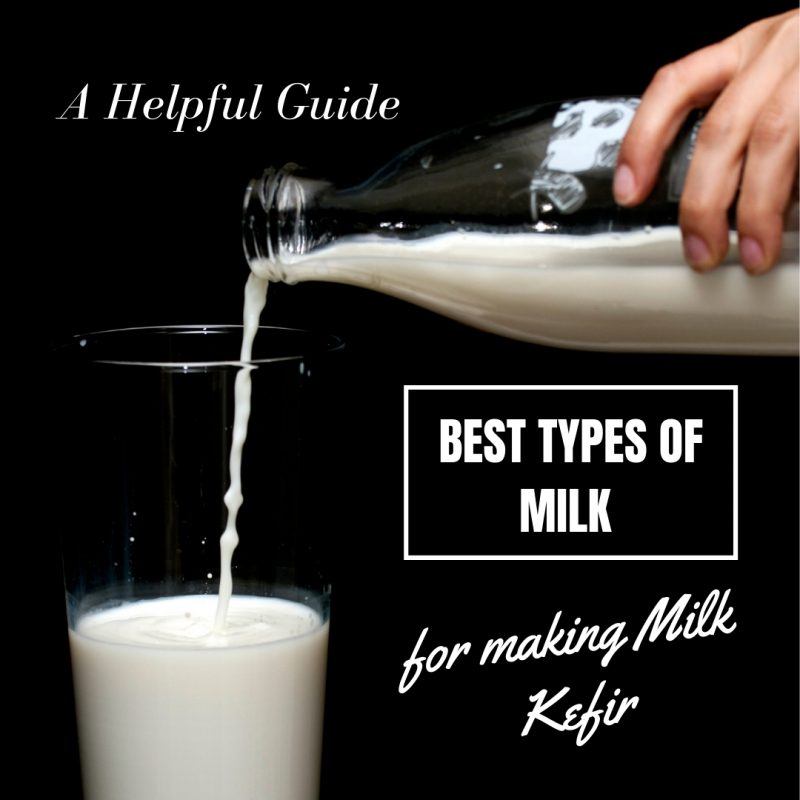 Best Types of Milk for Making Milk Kefir A Helpful Guide